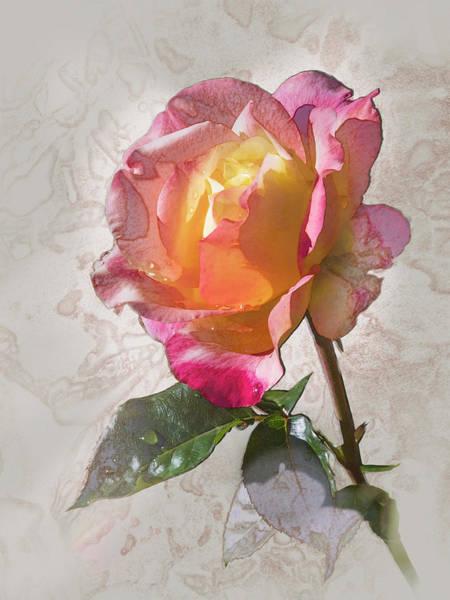 Rosa, 'glowing Peace' Art Print