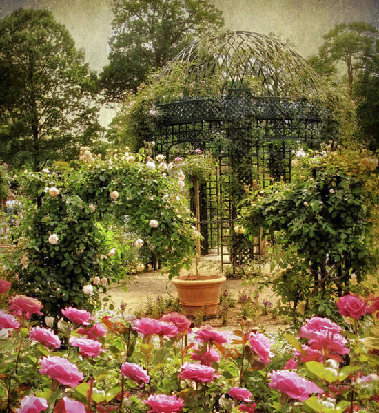 Photograph - Rose Arbor by Jessica Jenney