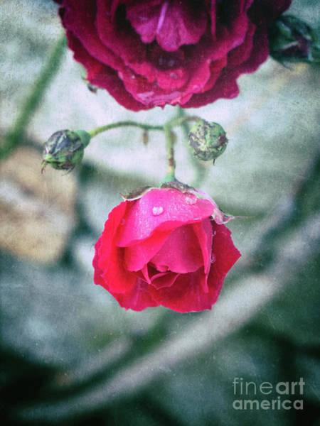 Photograph - Roses by Silvia Ganora