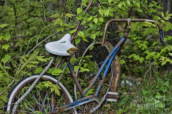 Photograph - Rotting Away by Alana Ranney