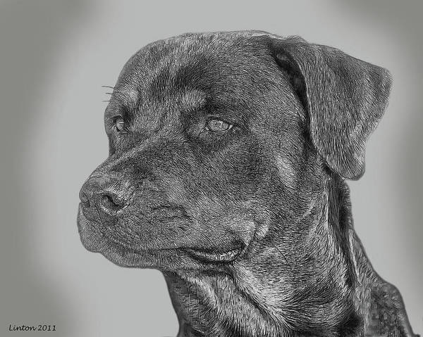 Digital Art - Rottweiler by Larry Linton