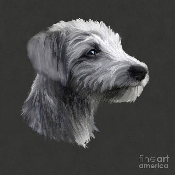 Furry Digital Art - Rough Coated Lurcher  by John Edwards