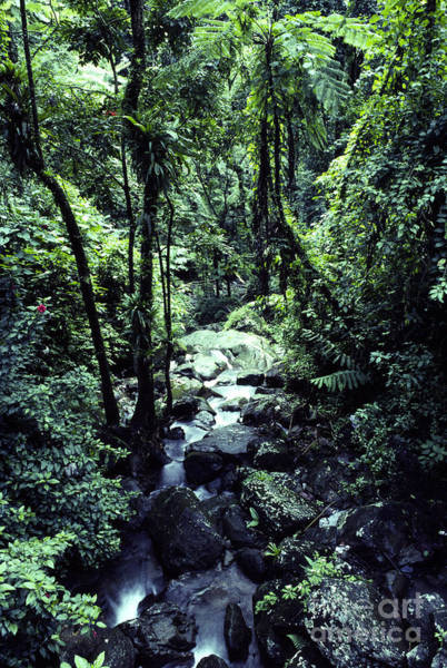 Photograph - Rushing Stream El Yunque National Forest by Thomas R Fletcher