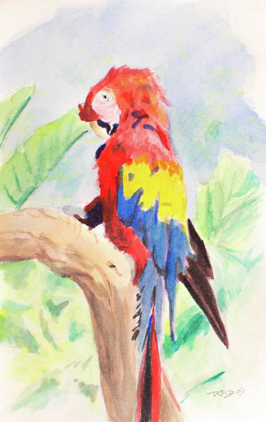 Painting - Safari Parrot by Christopher Reid