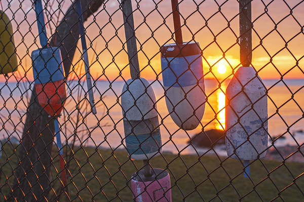 Photograph - Salem Willows Sunrise Buoys On The Fence 2 by Toby McGuire