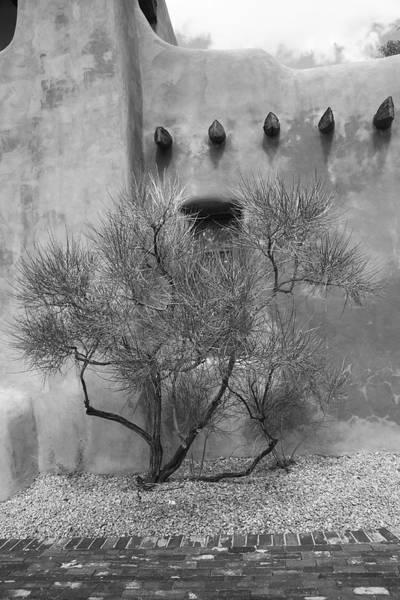 Photograph - Santa Fe - Adobe Building And Tree by Frank Romeo