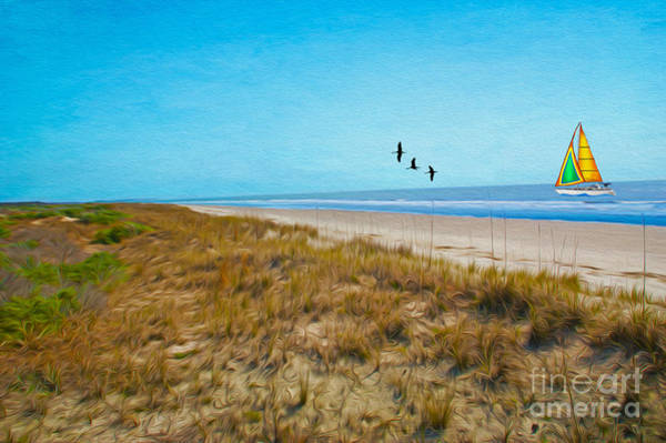 Shorebird Photograph - Sapelo Island Georgia by Laura D Young