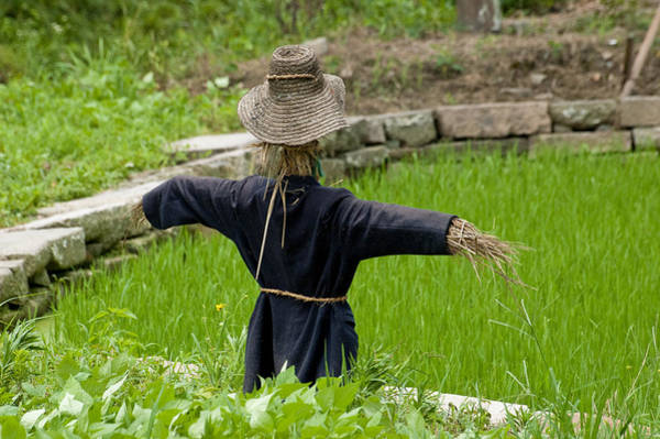 Photograph - Scarecrow In A Rice Paddy In Wuzhen, China. by Rob Huntley