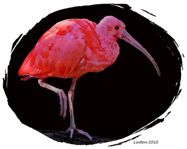 Scarlet Digital Art - Scarlet Ibis by Larry Linton
