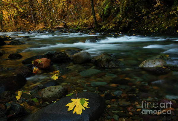 Wall Art - Photograph - Scattered Seasons by Mike Dawson