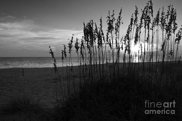 Wall Art - Photograph - Sea Grass On The Dunes At Sunset by ELITE IMAGE photography By Chad McDermott