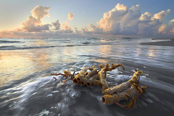 Photograph - Sea Jewel by Debra and Dave Vanderlaan