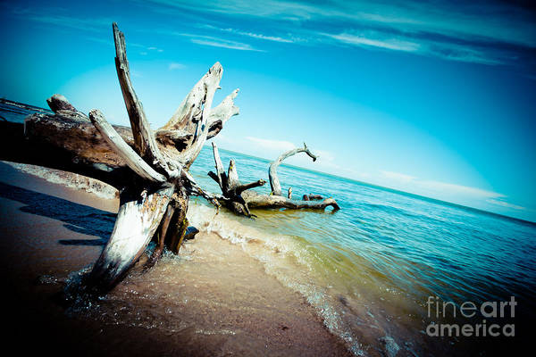 Photograph - Seacost With Old Tree In Water Kolka Artmif by Raimond Klavins