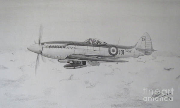 Hornbill Drawing - Seafire Mk17 by Simon Cockett