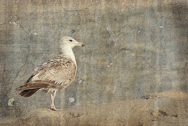 Photograph - Seagull - Jersey Shore by Angie Tirado