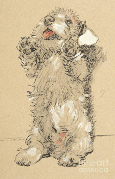 Furry Drawing - Sealyham by Cecil Charles Windsor Aldin