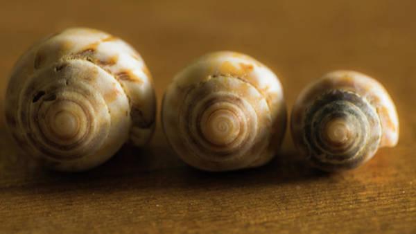 Three Seashells Photograph - Seashells by Ignacio Leal Orozco