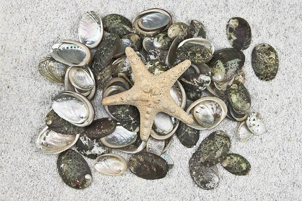 Mussel Wall Art - Photograph - Seashells by Joana Kruse