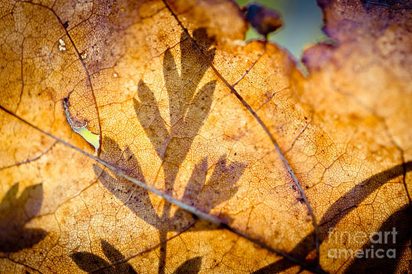 Photograph - Shadow Of Autumn Artmif by Raimond Klavins