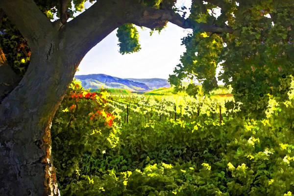California Oak Digital Art - Shady Vineyard by Patricia Stalter