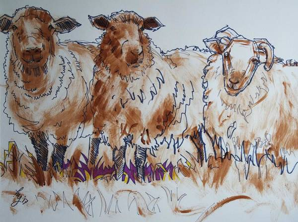 Mixed Media - Sheep Drawing by Mike Jory