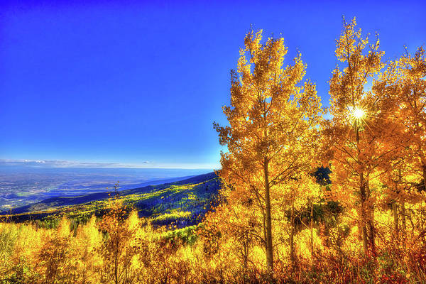 Grand Mesa National Forest Photograph - Shining Light by Midori Chan