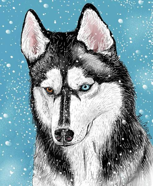 Husky Mixed Media - Siberian Husky by Heidi Creed