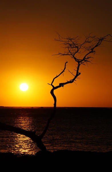 Photograph - Silhouetted Tree by Pamela Walton