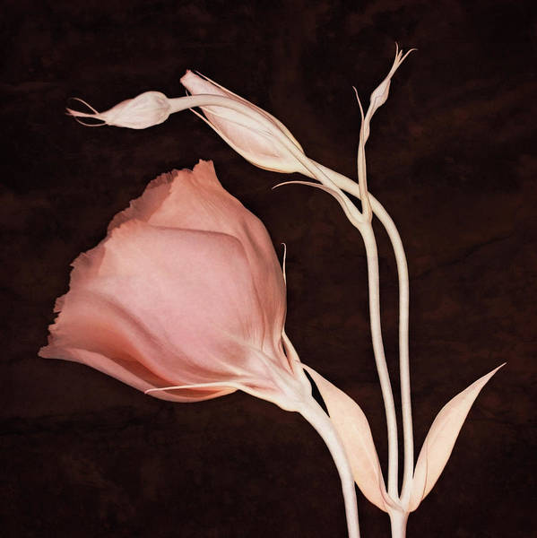 Photograph - Simplicity by Leda Robertson
