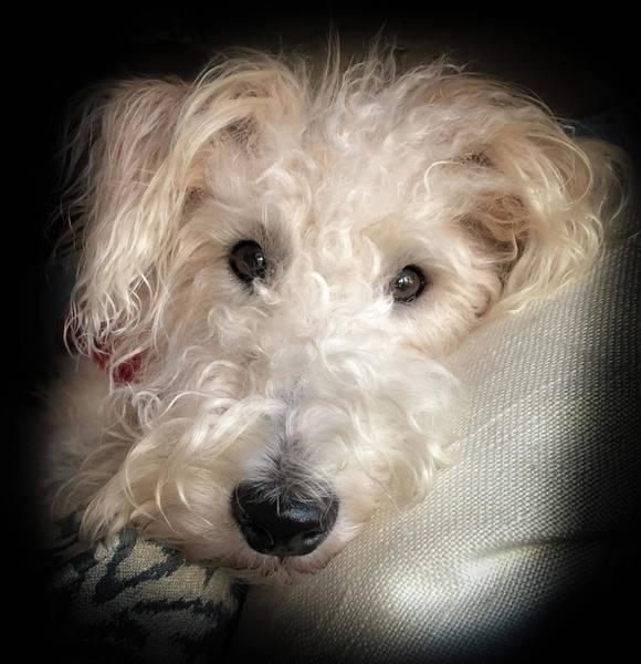 Fox Terrier Wall Art - Photograph - Skipper The Wire Fox Terrier by Karen Wiles