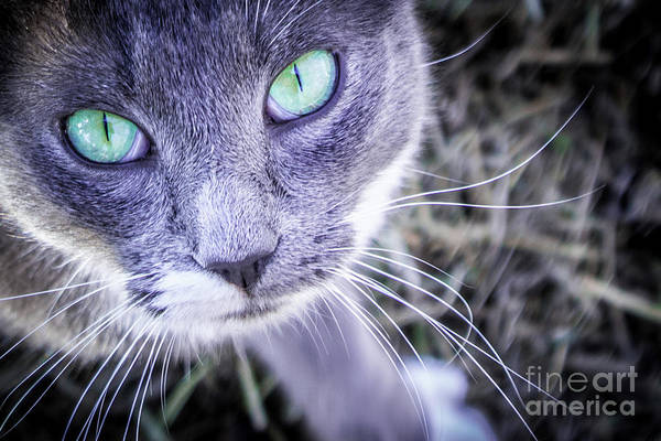 Photograph - Skitty Cat by Cheryl McClure