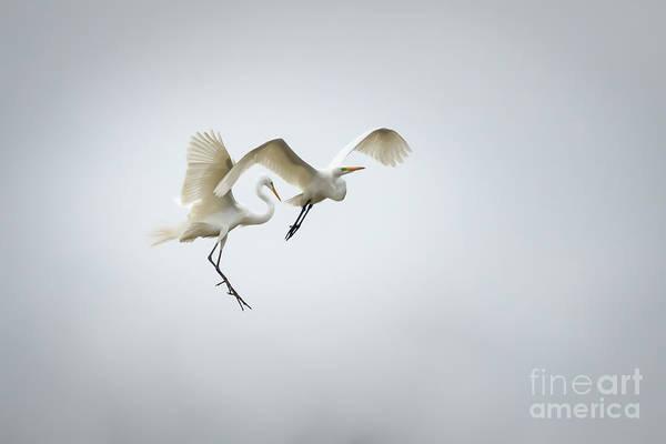 Photograph - Skydance by Richard Smith