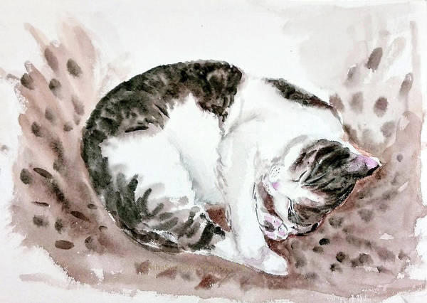 Painting - Sleeping Cat by Asha Sudhaker Shenoy