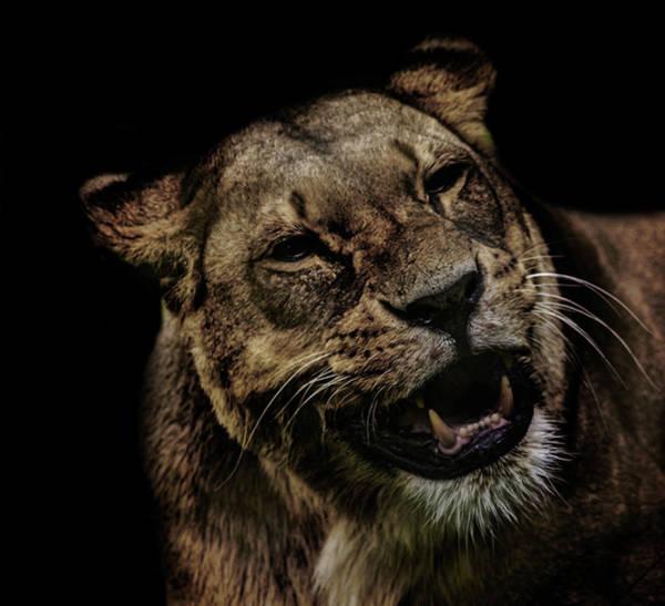 Orangutan Photograph - Smile by Martin Newman