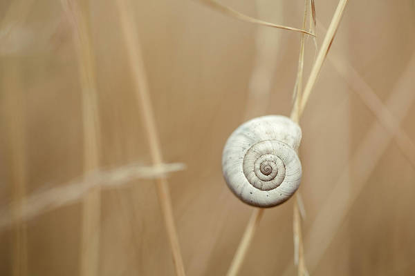 Grass Photograph - Snail On Autum Grass Blade by Nailia Schwarz