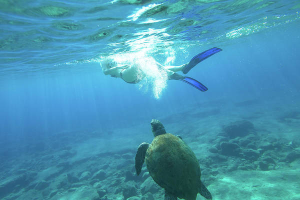 Photograph - Snorkeler Female Sea Turtle by Benny Marty
