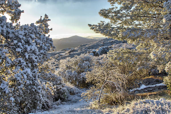 Photograph - Snow At Sunrise 3 by Peter Dyke