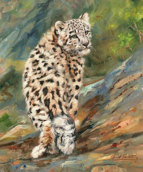 Snow Leopard Wall Art - Painting - Snow Leopard Cub by David Stribbling