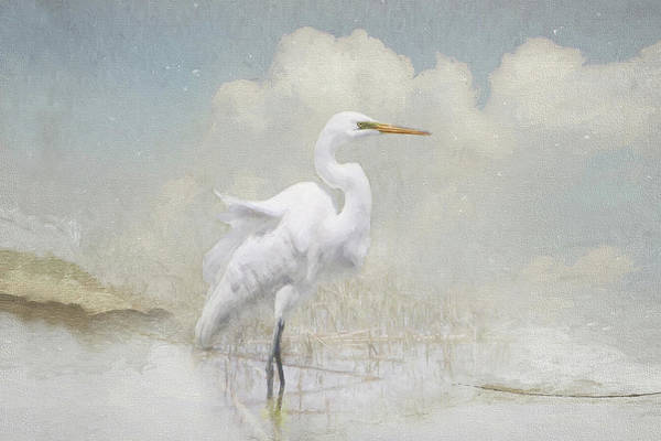 Photograph - Snowy Egret 2 by Karen Lynch