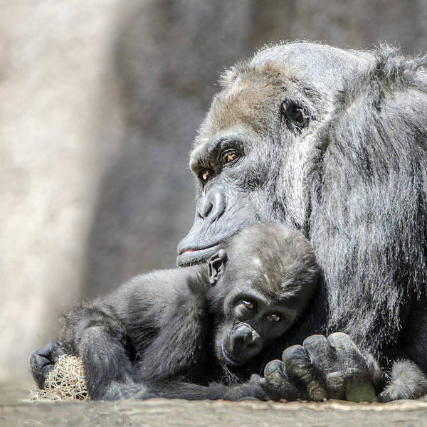 Photograph - Snuggle by William Bitman