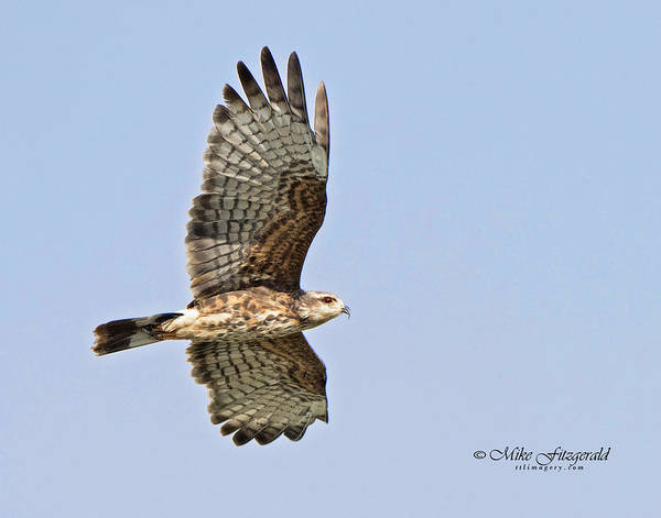 Photograph - Soaring by Mike Fitzgerald