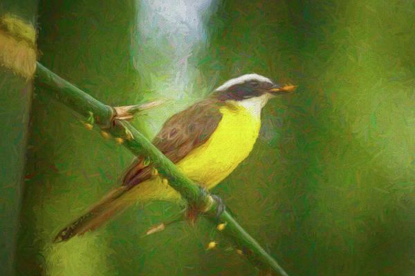 Photograph - Social Flycatcher Panaca Quimbaya Colombia by Adam Rainoff