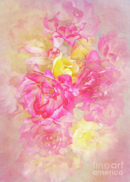 Wall Art - Photograph - Soft Pastels by Svetlana Sewell