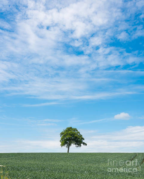 Photograph - Solo Tree by Colin Rayner