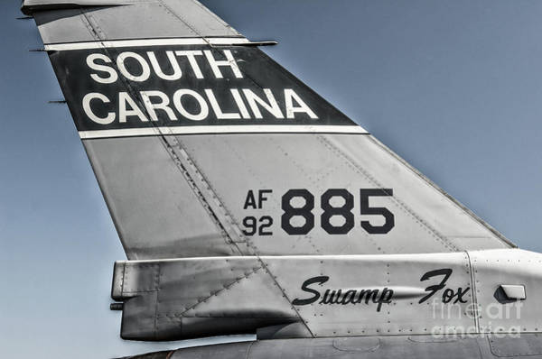 Photograph - South Carolina Swamp Fox by Dale Powell