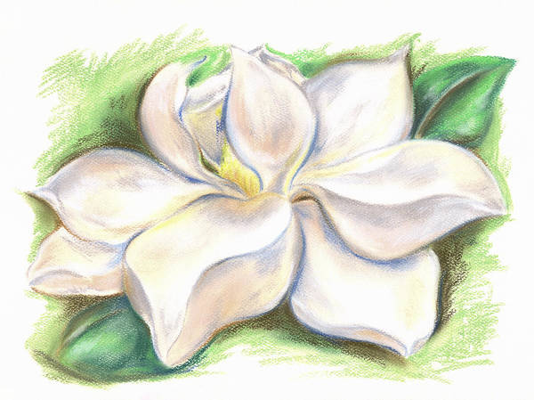 Pastel - Southern Magnolia Blossom by MM Anderson