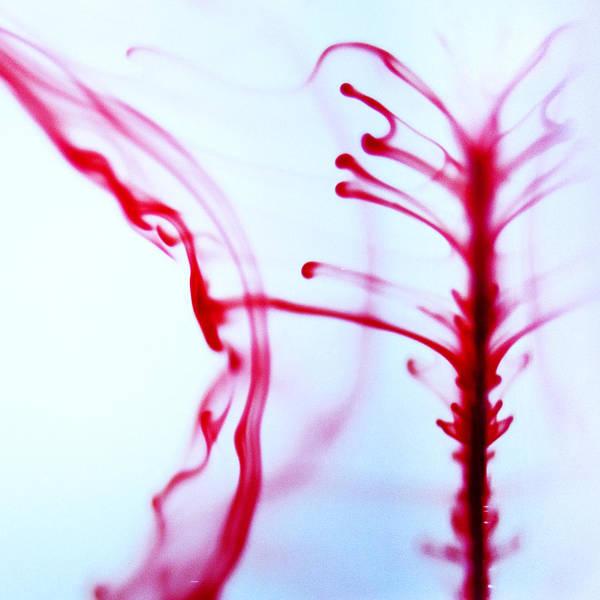 Photograph - Spine by Ryan Heffron