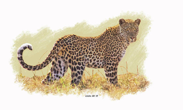 Digital Art - Spotted Cat by Larry Linton