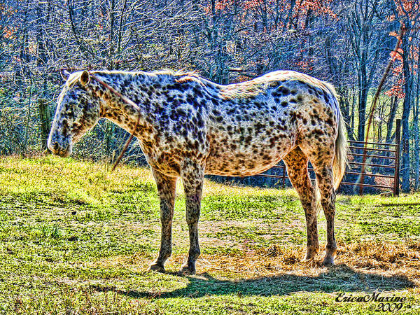 Photograph - Spotted Horse by Ericamaxine Price