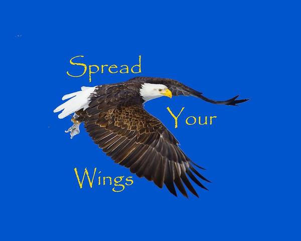 Photograph - Spread Your Wings by Greg Norrell
